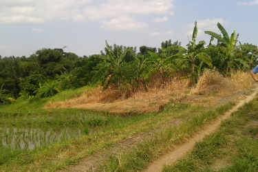 Land for sale in Brembeng Tabanan 400 sqm