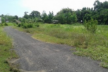 Land for sale in Sudimara Tabanan