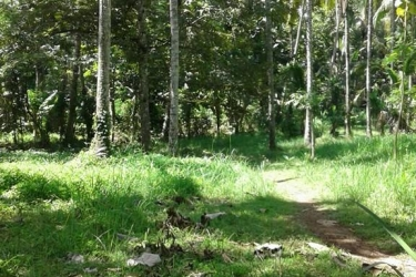 Land for sale in Sangeh- Badung