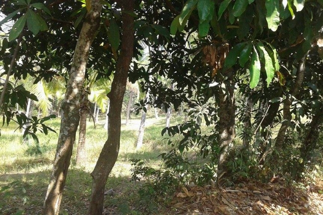 lAND FOR SALE IN LOMBOK BARAT- NTB